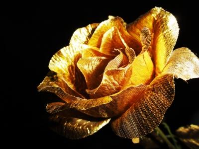 The golden rose of Siegen