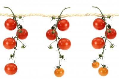 Tomaten 57