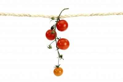Tomaten 56