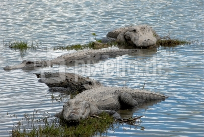 Everglades - Familienausflug
