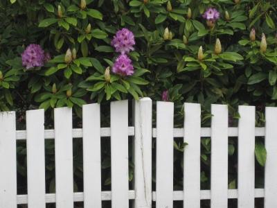Blüten am Zaun