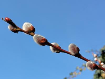 Frühling?!