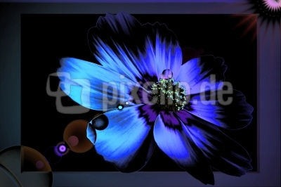 wallpaper blaue blume
