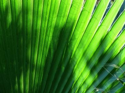 grüne Linien