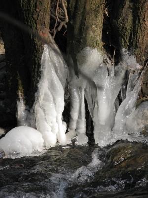 Eis am Baum beim Graben