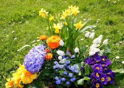 Kostenloses Foto Frühlingsblumen Für Den Garten Pixeliode