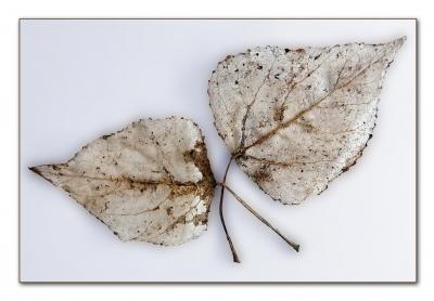 fragile Überreste