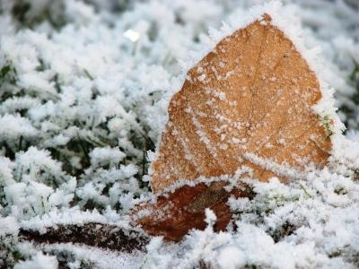 gefrostetes Blatt