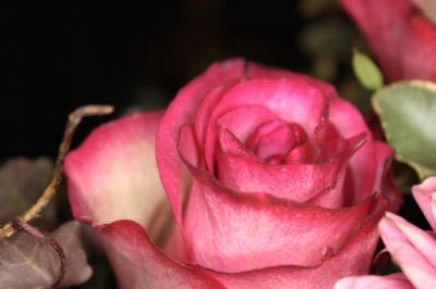 Blüten 349