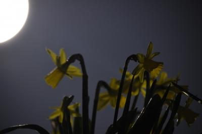 Frühling bei Vollmond