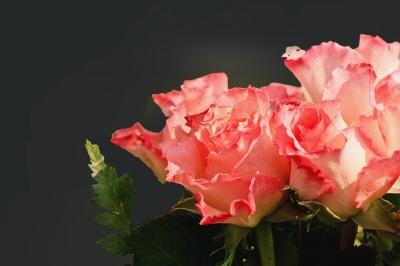 Rosen auf Schwarz
