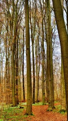 Frühling im Philosophenwald