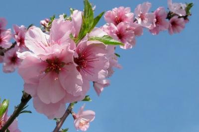 Blütentraum in rosa_2