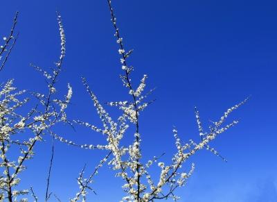 Blüten vor Himmelsblau