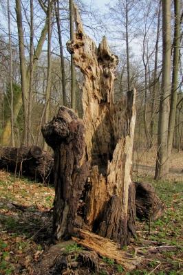 Das war mal ein Baum