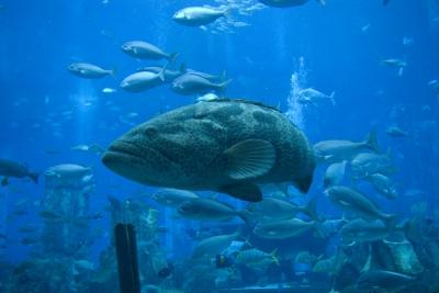 Aquarium-Bewohner