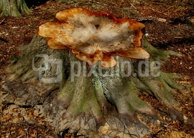 Baumstumpf mit Sägedeko