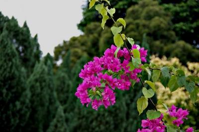 Im Garten des Sultans 5