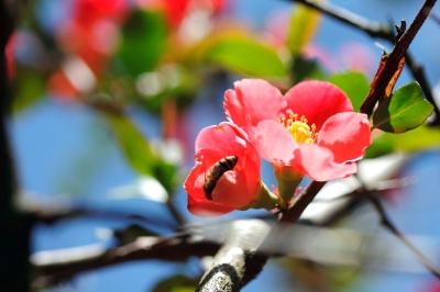 Blütenwerk