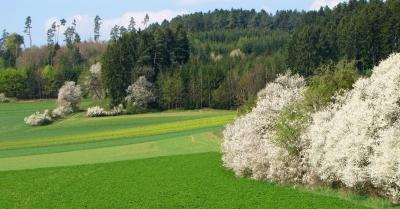 Frühling in Wald und Flur 3