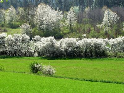 Frühling im Heckengäu