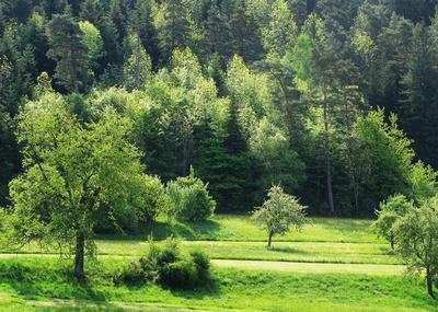 Mischwald in der Frühlingssonne