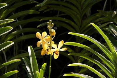 Orchideengarten Singapur