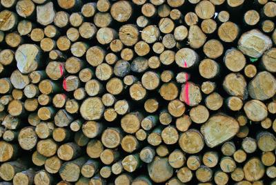 Ne Menge Holz vor der Hütte