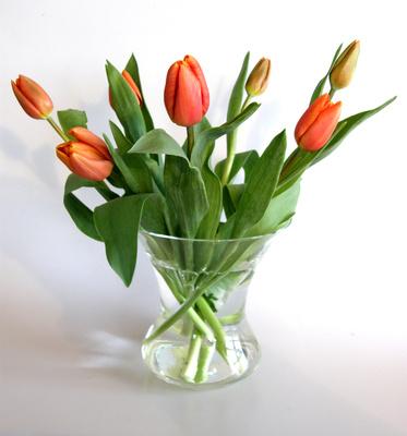 kostenloses foto tulpen in vase. Black Bedroom Furniture Sets. Home Design Ideas