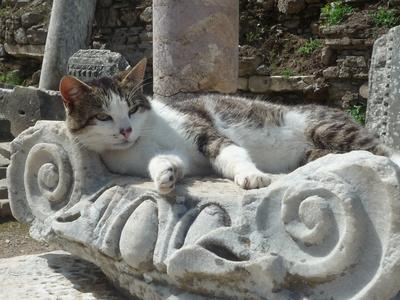 Katzenkorb in einer antiken Stadt