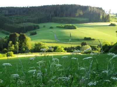 Abendstimmung im Schwarzwald mit Wiesen und Kräutern