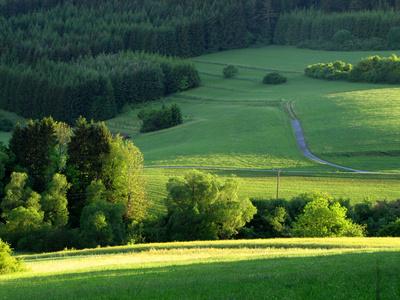 Schwarzwald und Wiesen im Abendlicht
