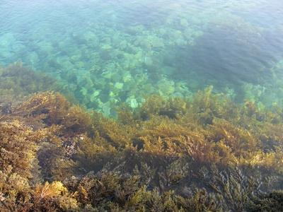 Meerespflanzen