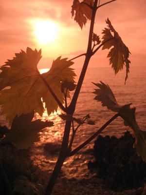 Licht und Wärme für die Blätter