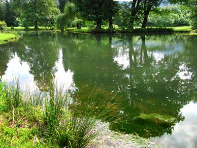 Biotop mit Teich und alten Bäumen