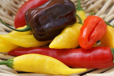 Bunte Chilivielfalt