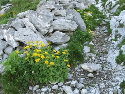 Leben zwischen den Steinen