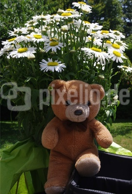 Teddy - der Blumenfreund