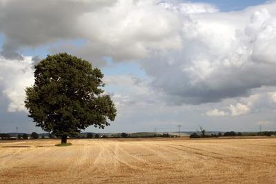 einzelner Baum in einem Feld