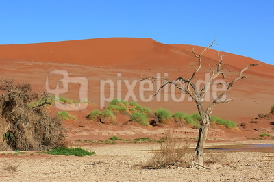 Wüste in Namibia (2)