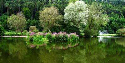 Biotop am Teich