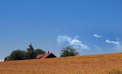 Bauernhaus versinkt im Weizen