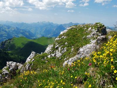 Alpenflora auf dem Stockhorn