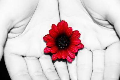 Haende und Blume