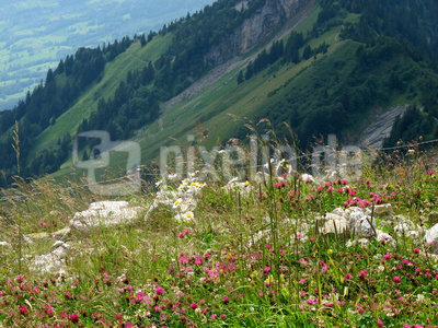 Farbenfrohe Bergwiese