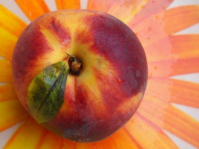 Sommerfrucht