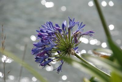 Blumenmakro