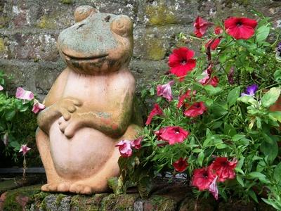Hier bin ich Frosch, hier darf ich´s sein