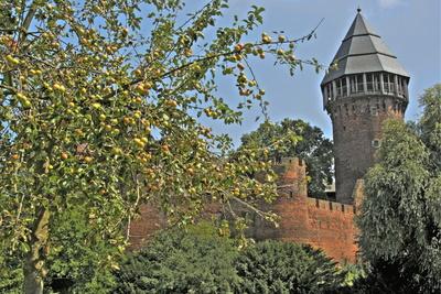 Burg hinter Bäumen