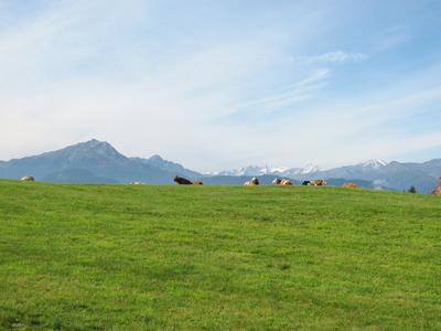 Südtirol: Glückliche Kühe vor prächtiger Bergkulisse